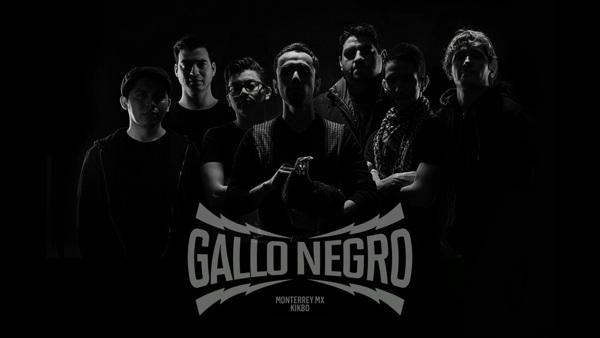 gallo_negro_5